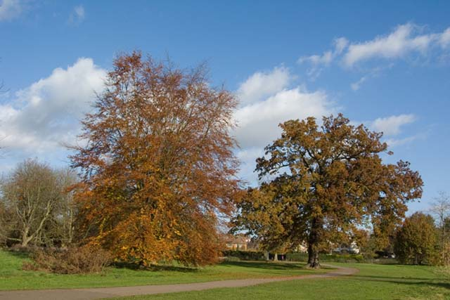 Cassiobury Park showing its autumn colours - geograph.org.uk - 693980