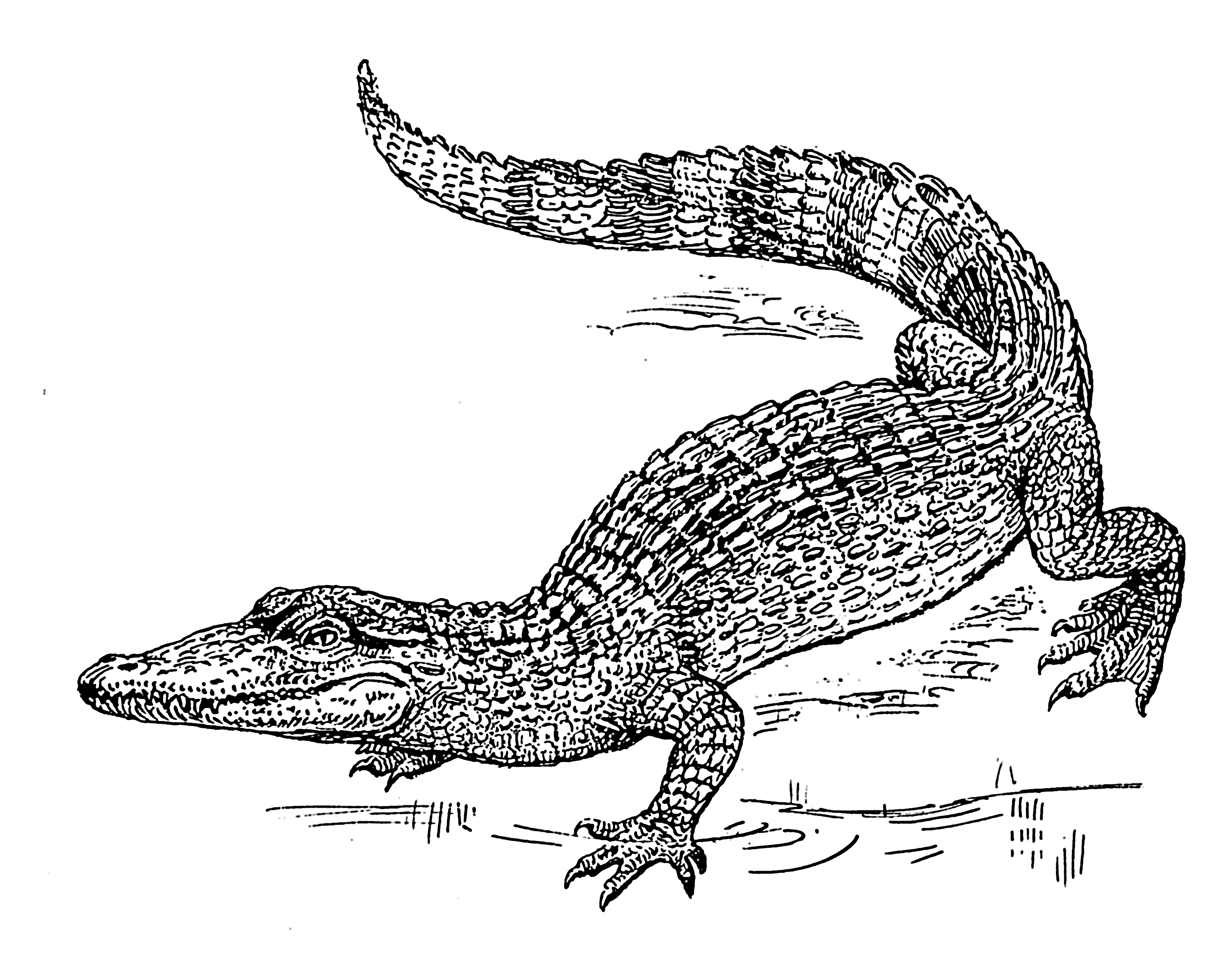 FileCrocodile PSFpng Wikipedia