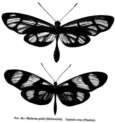 difference between genus and species by giving an example