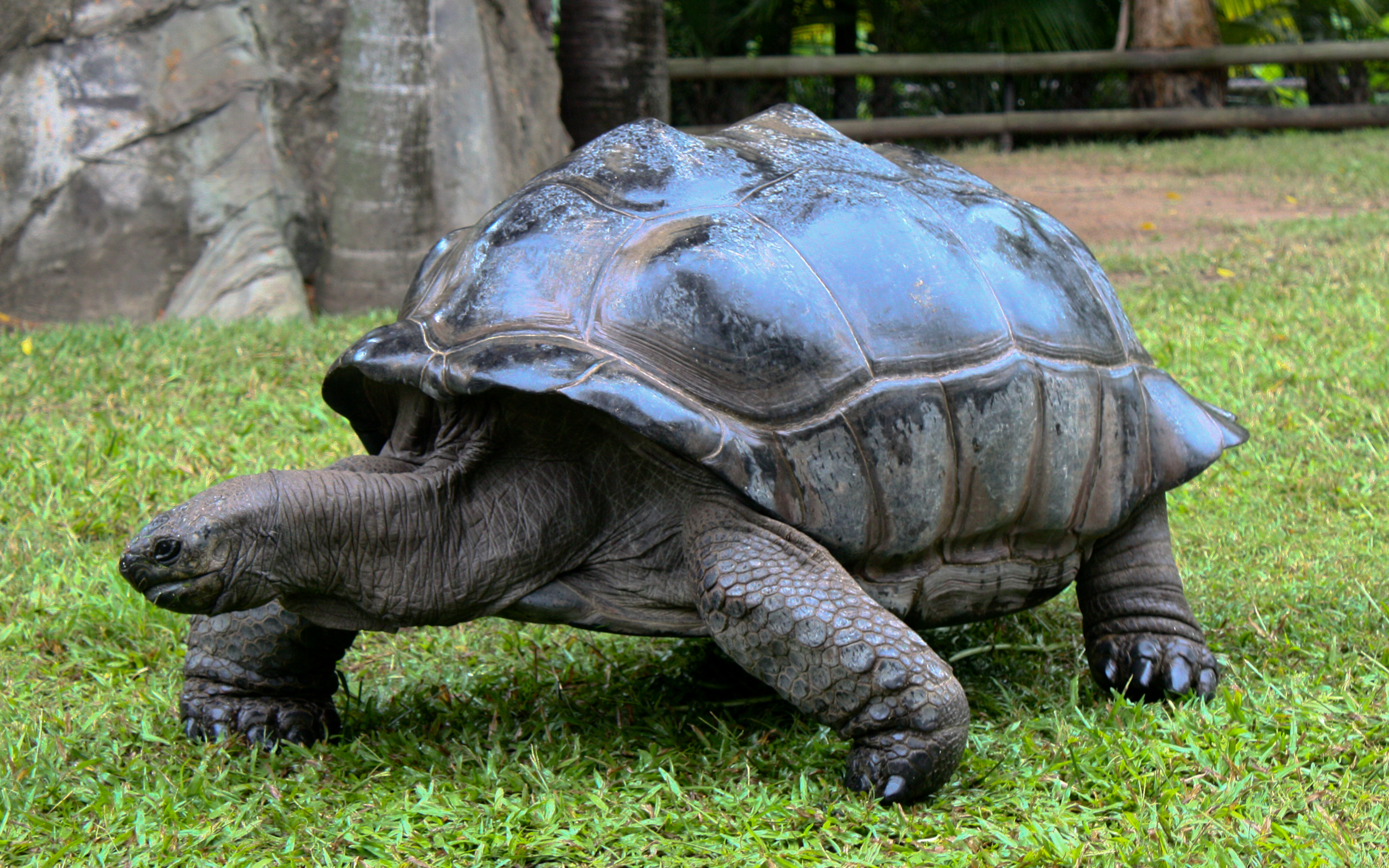 A Giant Tortoise Can Travel