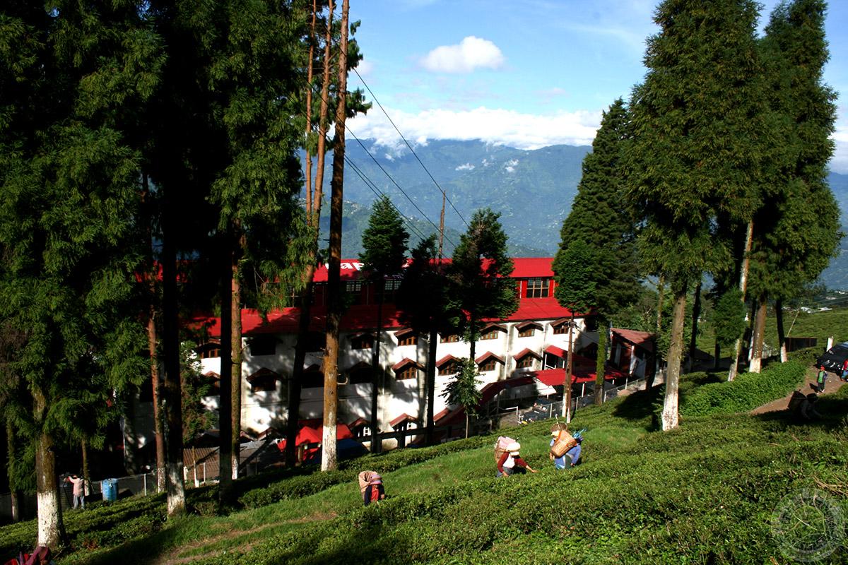 Homestay in tea plantation