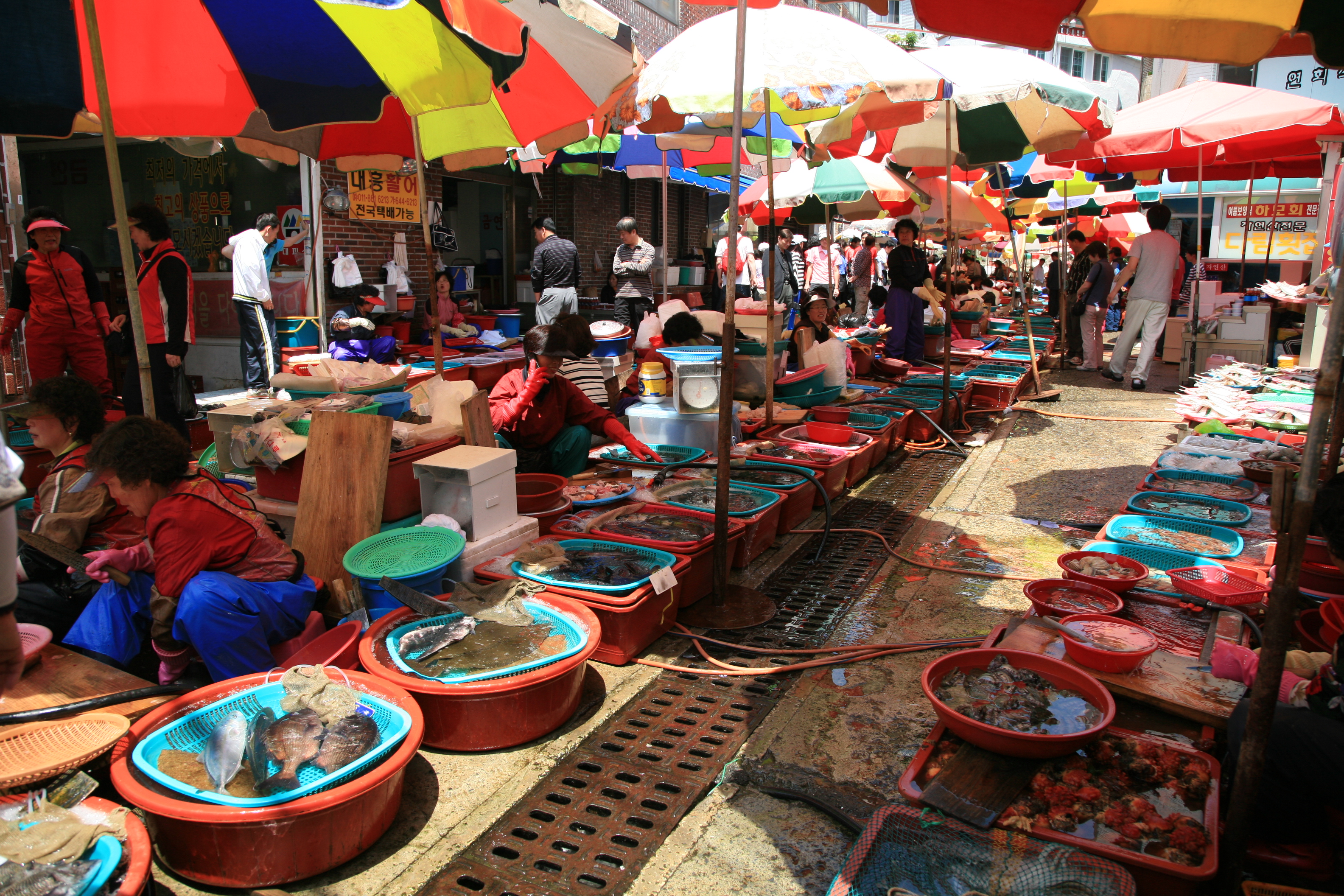 Live fish trade wiki everipedia for Oriental fish market