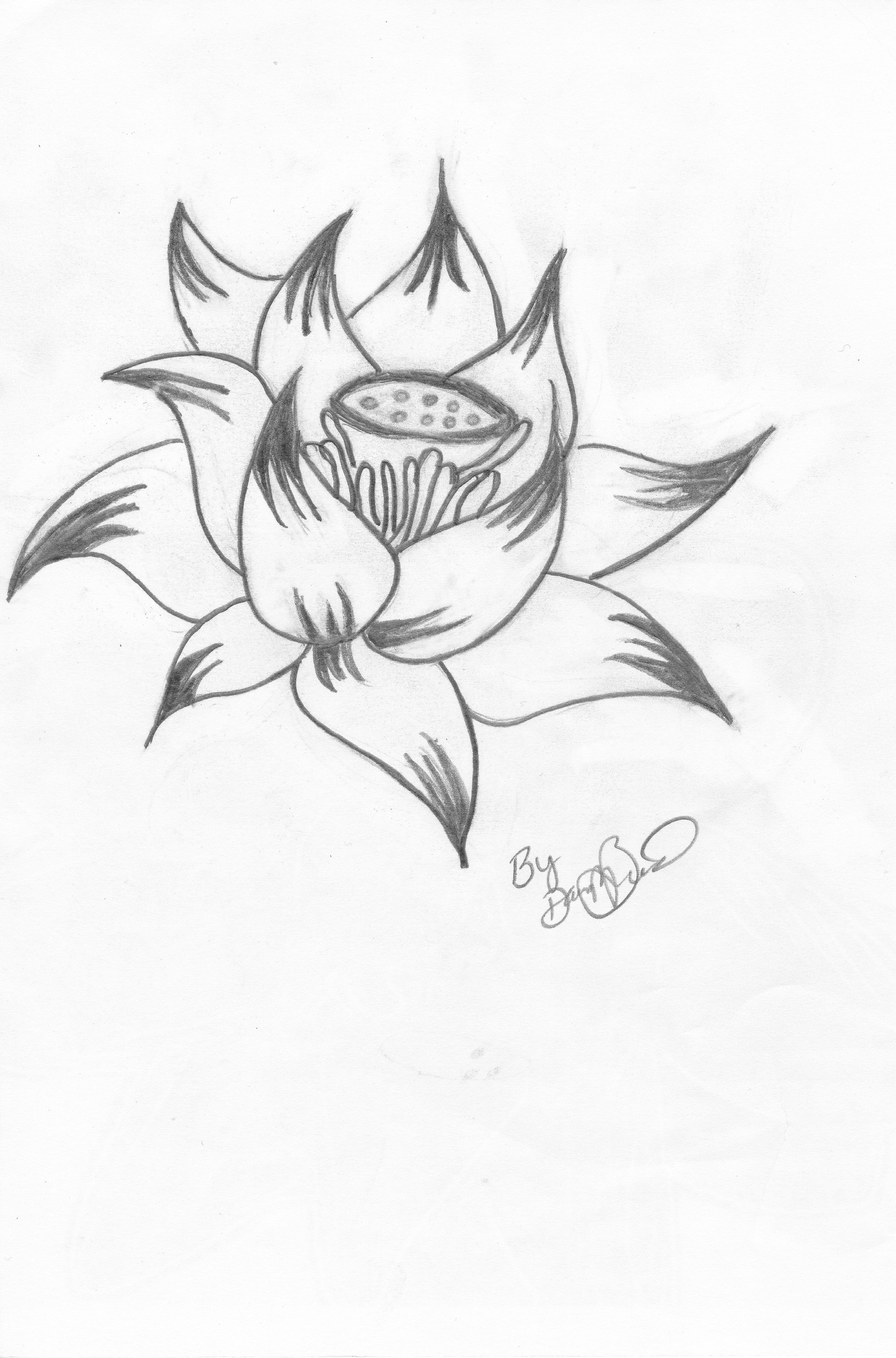 Filelotus Flower Illustrations By Dmbjpg Wikimedia Commons
