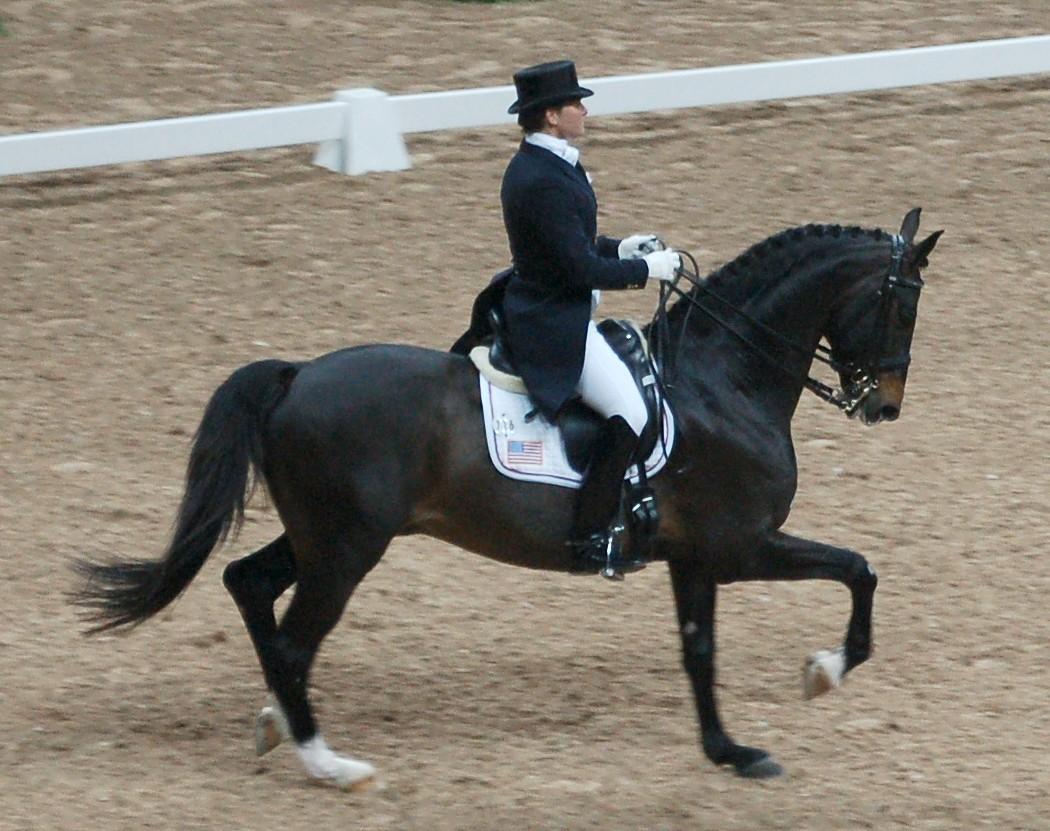 Swedish Warmblood - Horse Scanner
