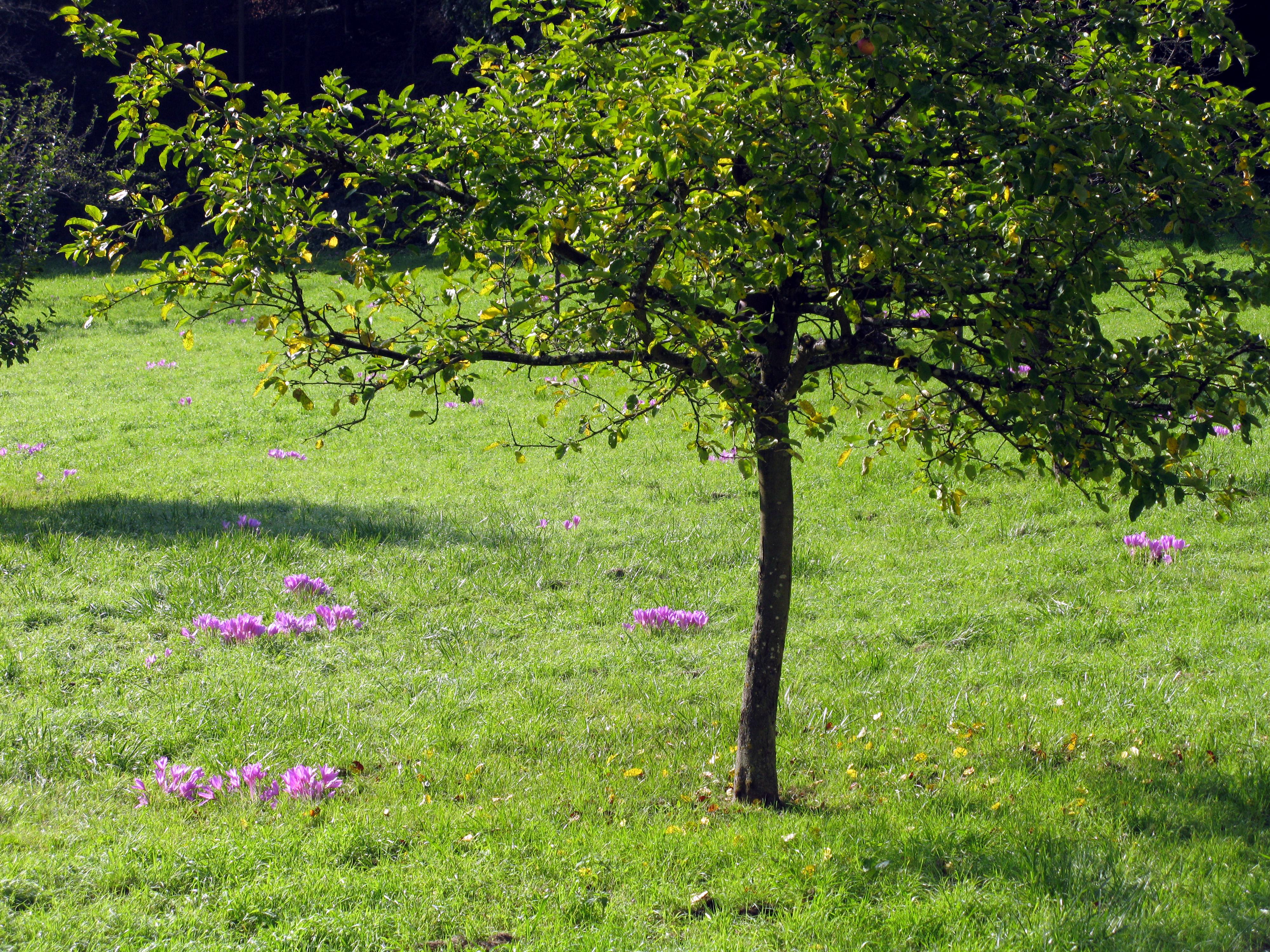 File Liliental Mit Herbstzeitlosen 2 Jpg Wikimedia Commons