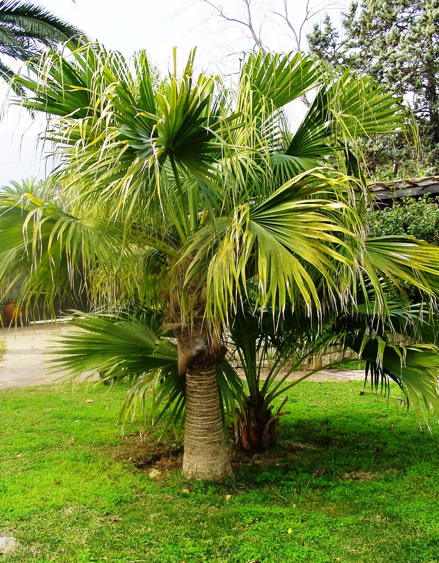 for Vegetacion ornamental