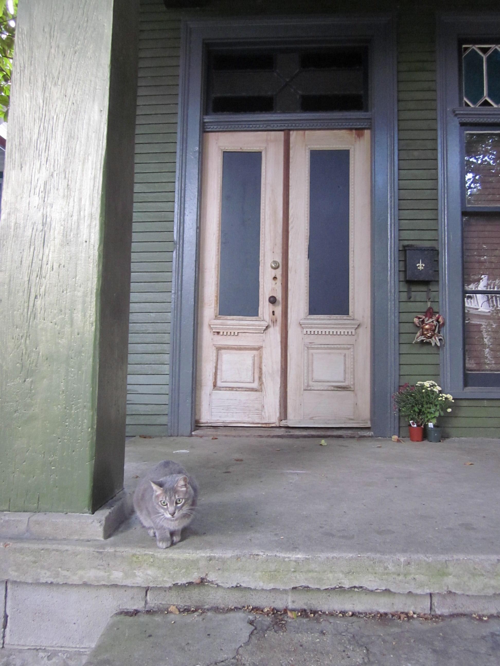 door box doors product perch outdoor cat window solarium the
