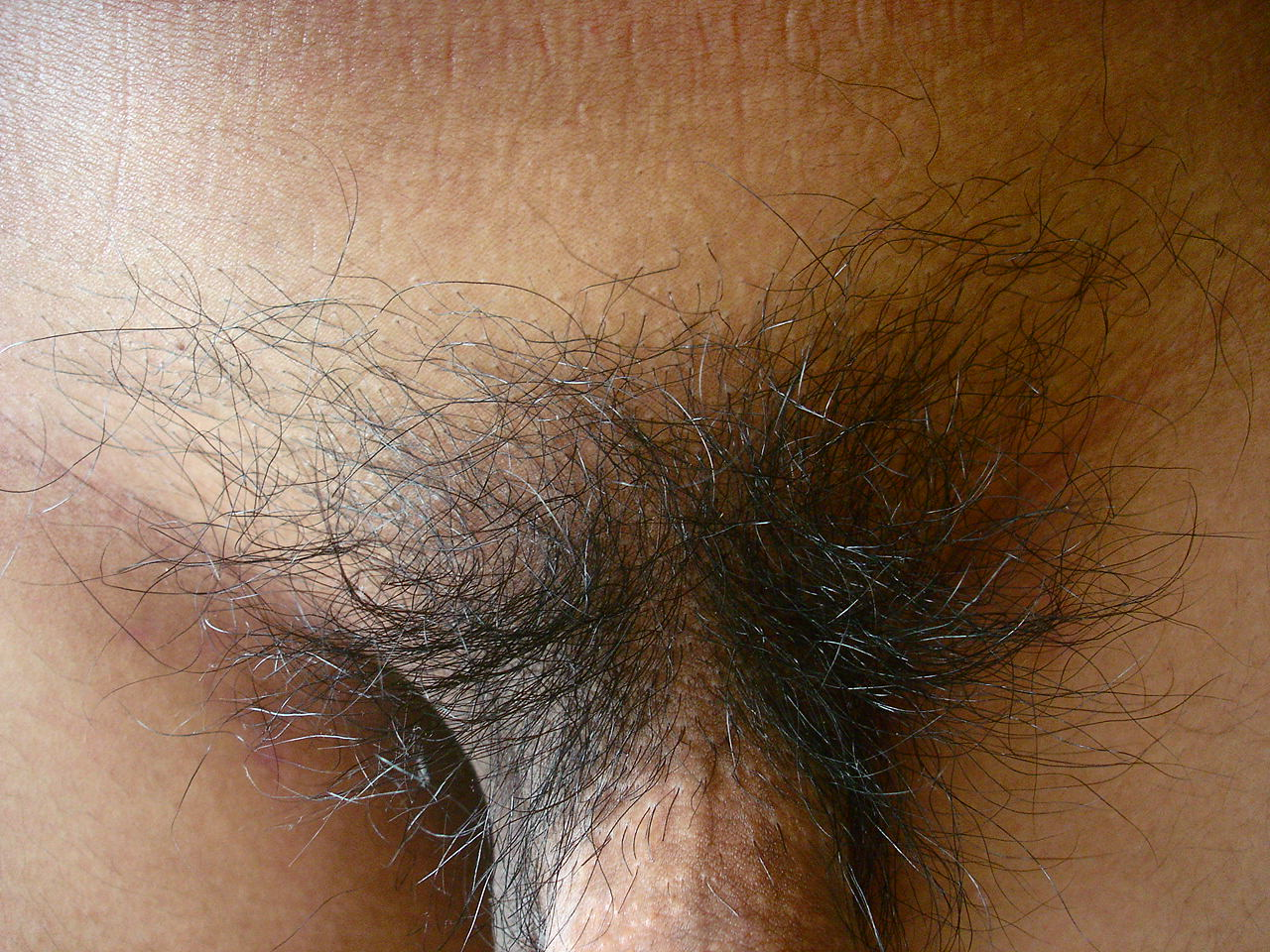 документация стрижка лобковых волос у мужчин фото всем