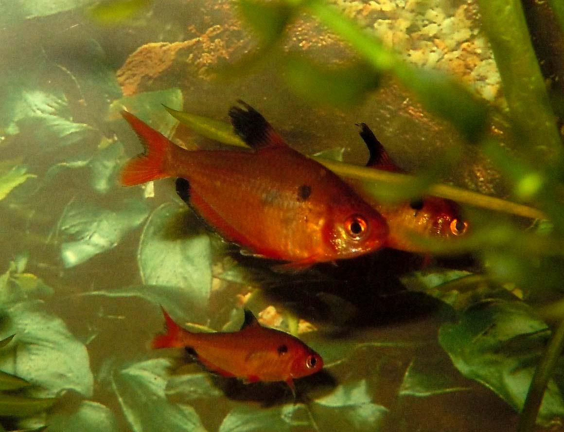 стайные фото рыбки рыбки аквариумные