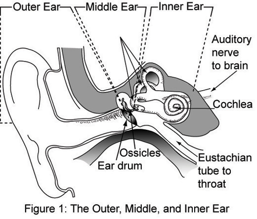 File Outer  Middle And Inner Ear Jpg