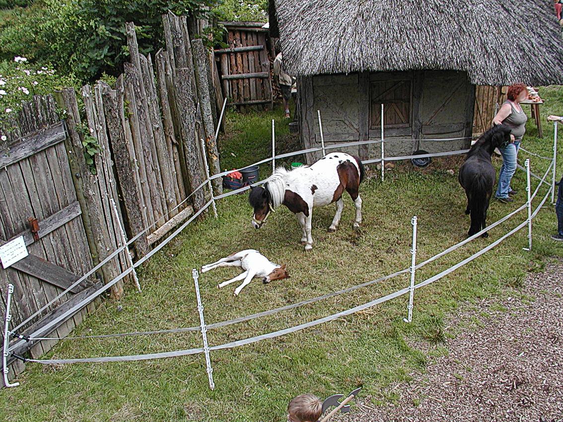 забор для животных картинки это изобилие