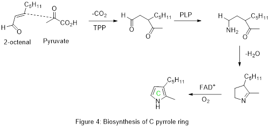 Biosynthesis of pyrrole ring C