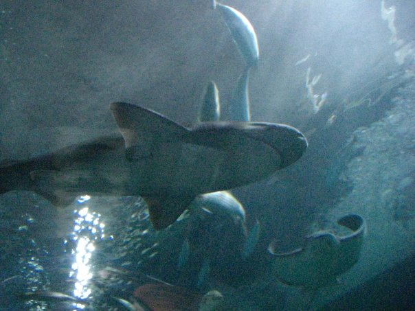 File:San Francisco Bay Aquarium 2011 007.jpg