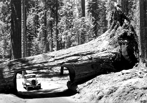 sequoia national park bbw dating site Book a campsite at lodgepole campground-sequoia and kings canyon national park, ca find within the giant forest area of sequoia national park with stops at.