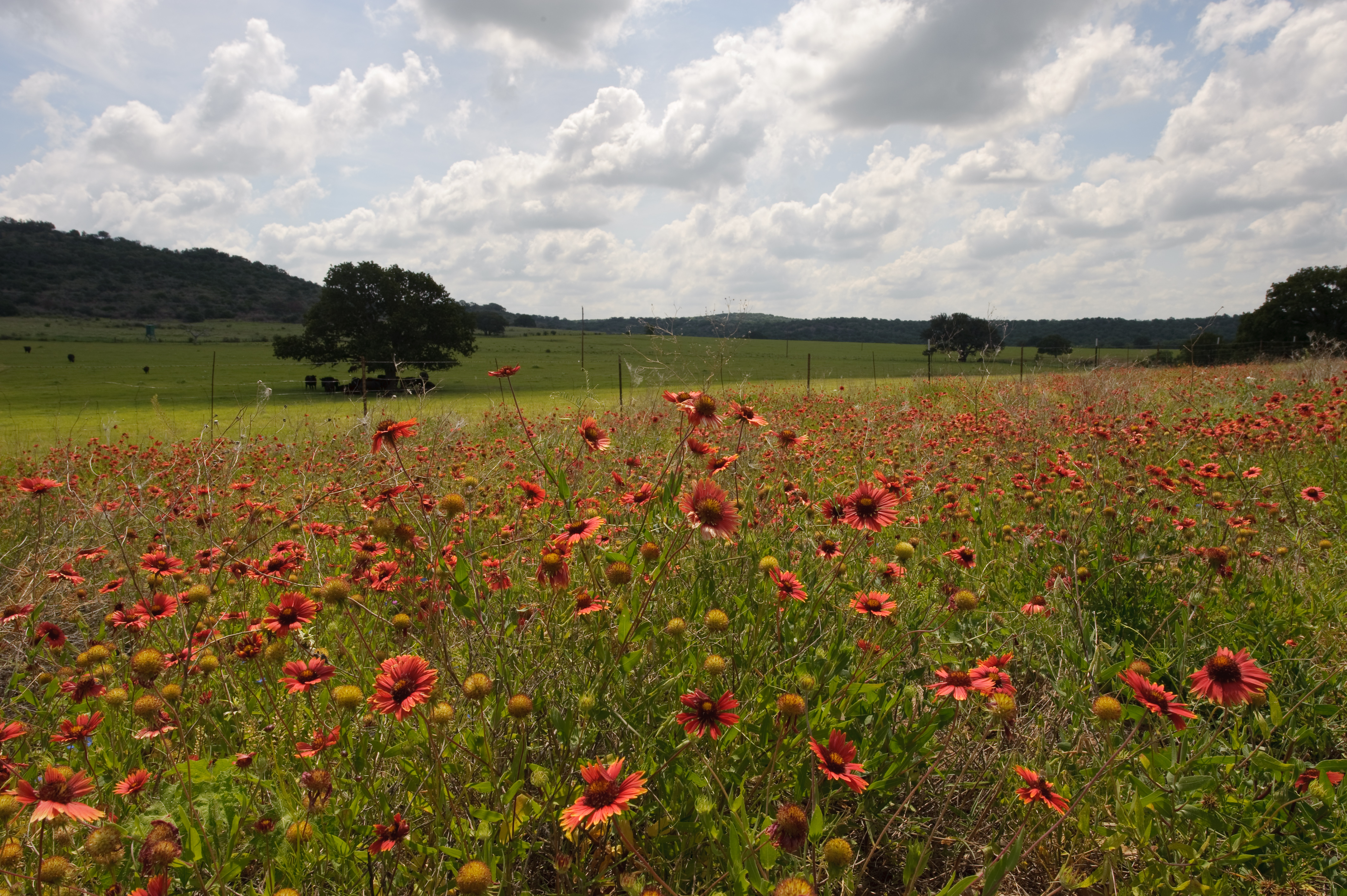 Filespring Time In The Hill Country Brings On Wild Flowers And