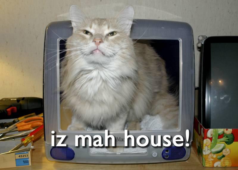 Cat Memes Are Stupid