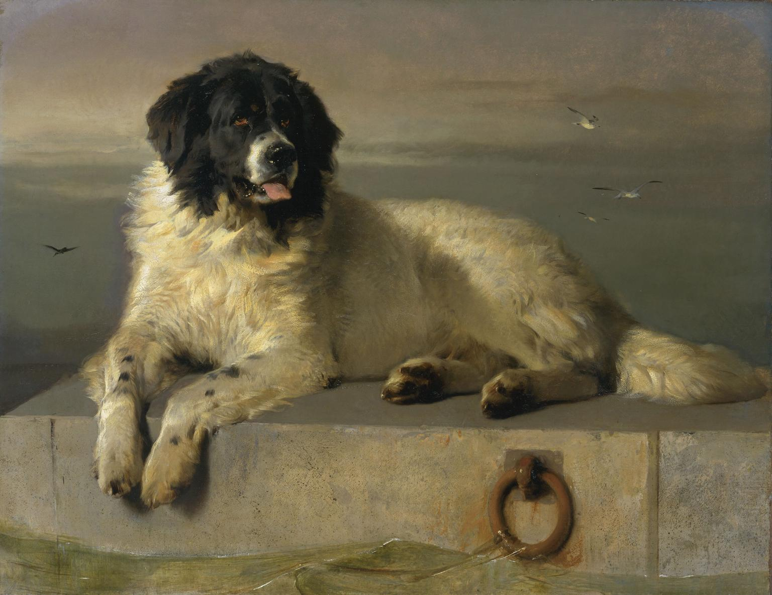 File:A Distinguished Member of the Humane Society by Sir Edwin Landseer.jpg
