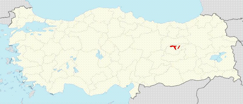 Allium tuncelianum Wikipedia