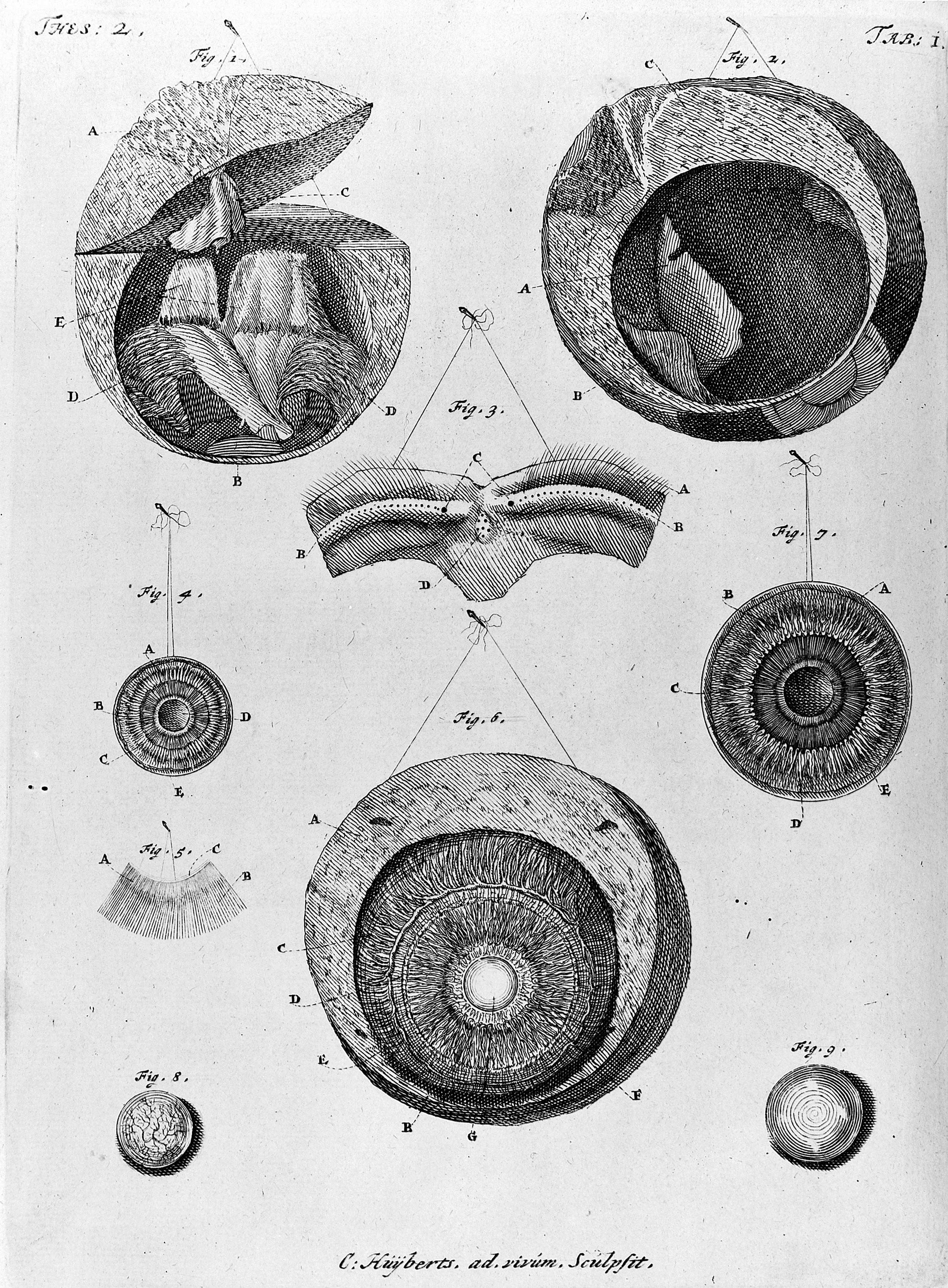file anatomical drawings of the eye wellcome m0011086 jpg