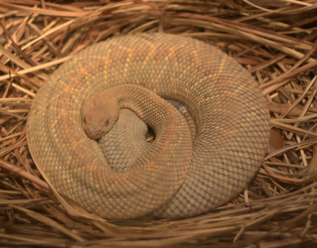 Rattlesnake Island  Aa S St Augustine Fl