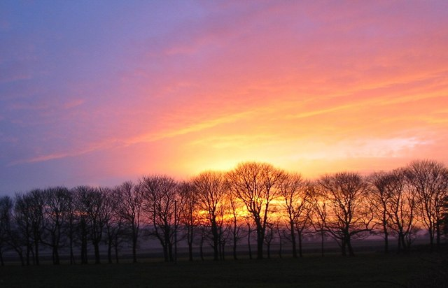 Avenue of trees against autumn sunset, Bosley Fields Farm - geograph.org.uk - 559377