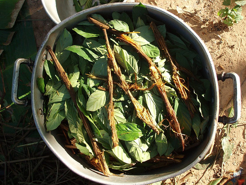http://upload.wikimedia.org/wikipedia/commons/c/c9/Ayahuasca_and_chacruna_cocinando.jpg