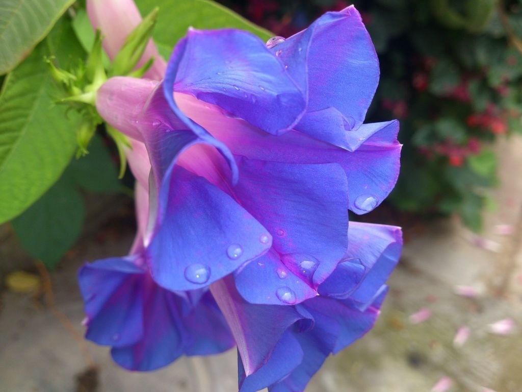 File Blue flower Image Wikimedia mons