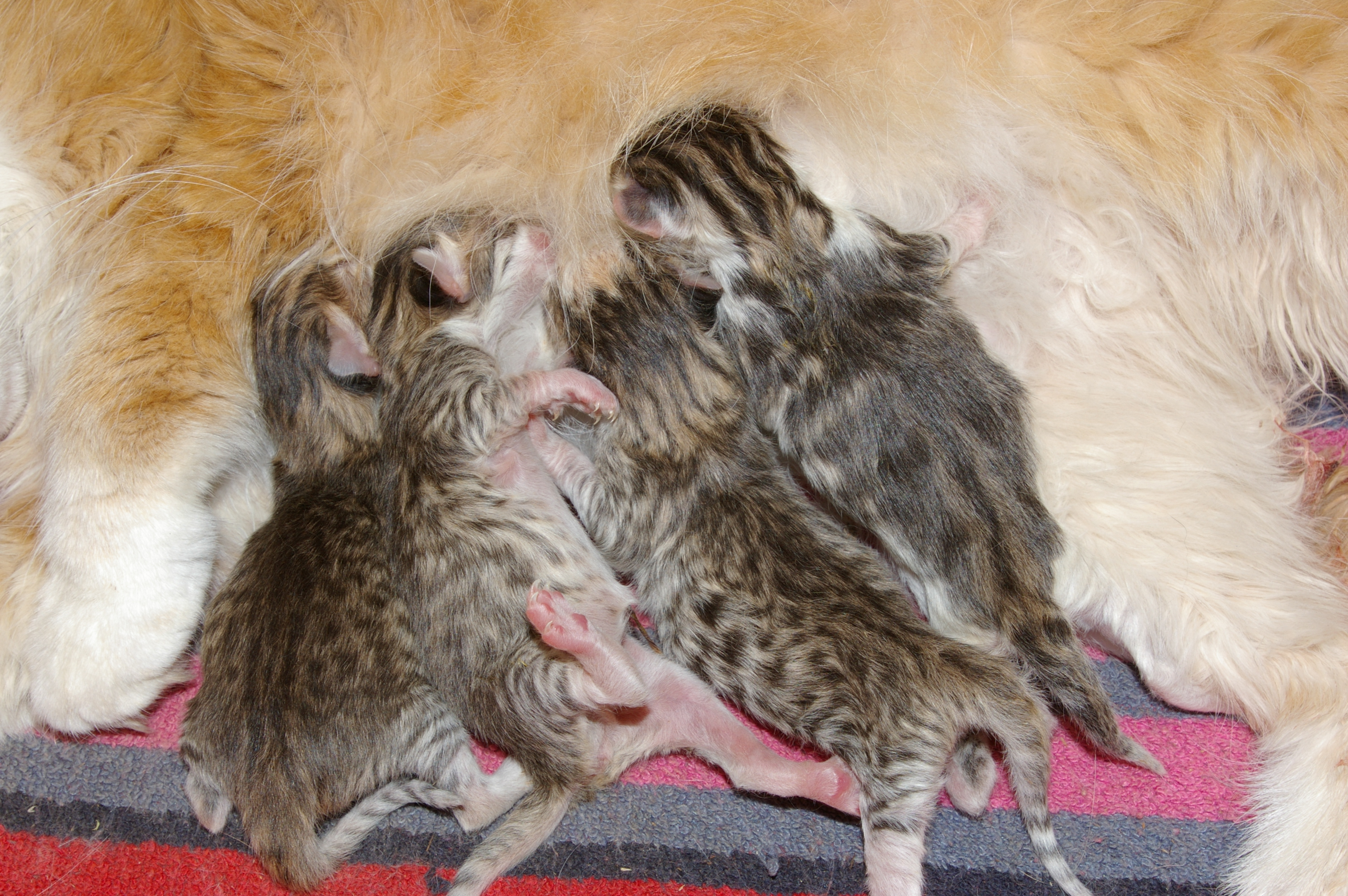 donner chatons