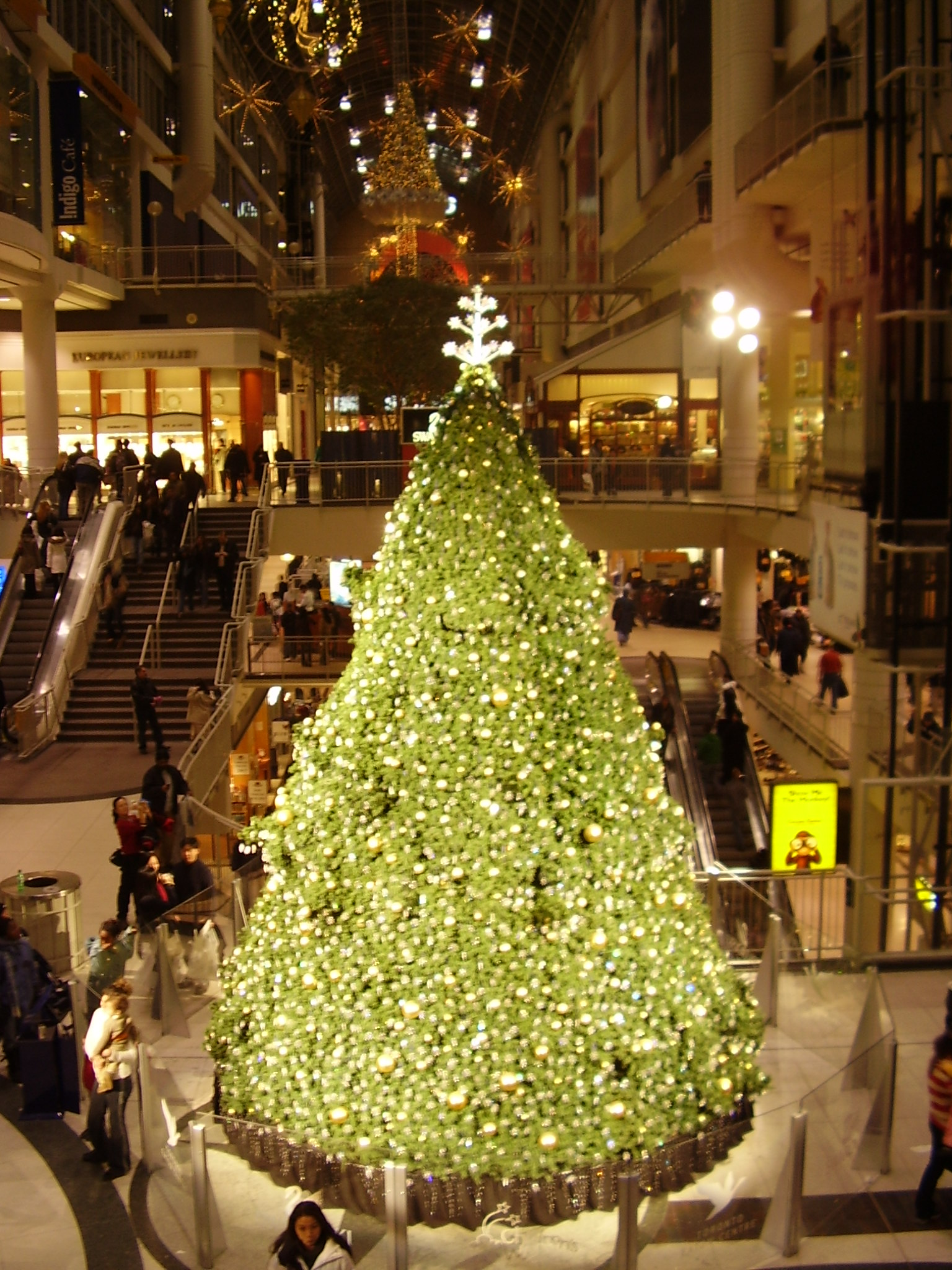 Image Result For Christmas Tree Outdoor