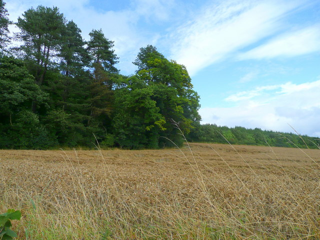 File:Edge of Blackmoor Plantation - geograph.org.uk - 928169.jpg