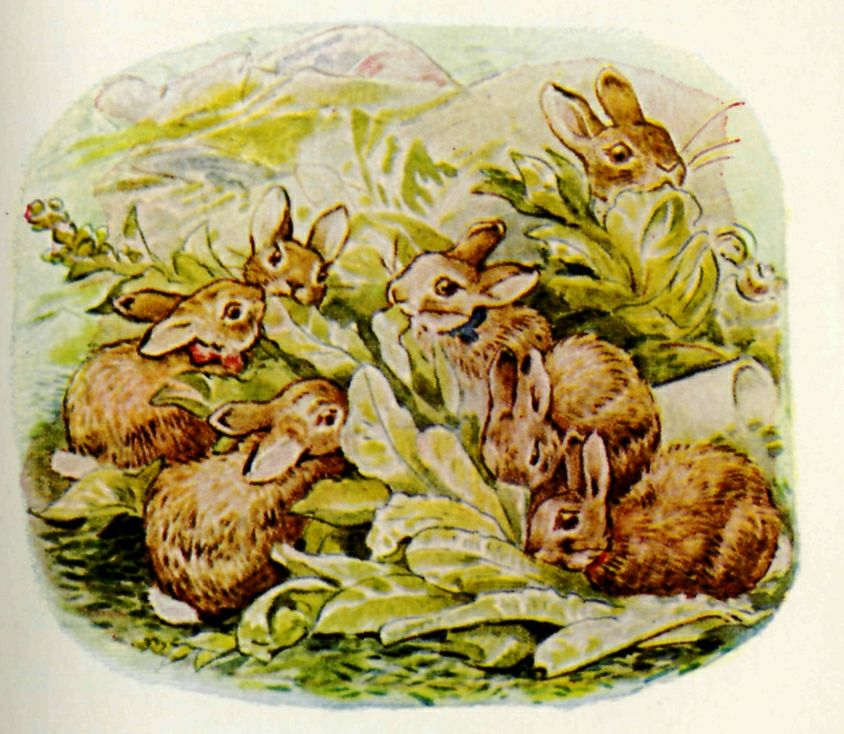 Beatrix Potter [Public domain], via Wikimedia Commons