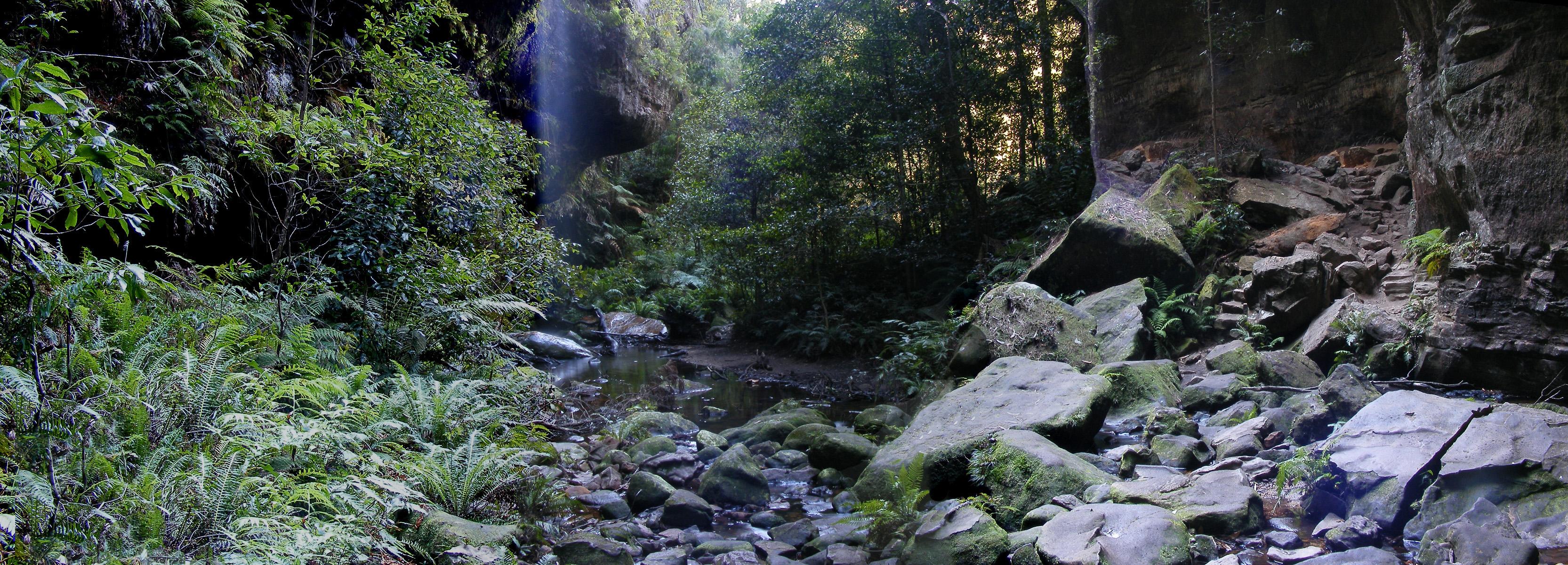 Green Tree Python Habitat