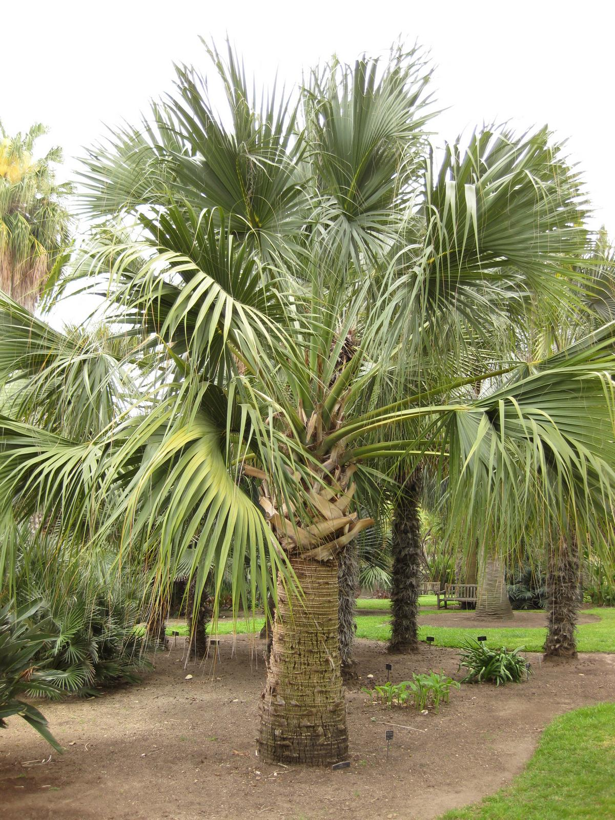 Date Palm Rd Vero Beach Fl  Usa