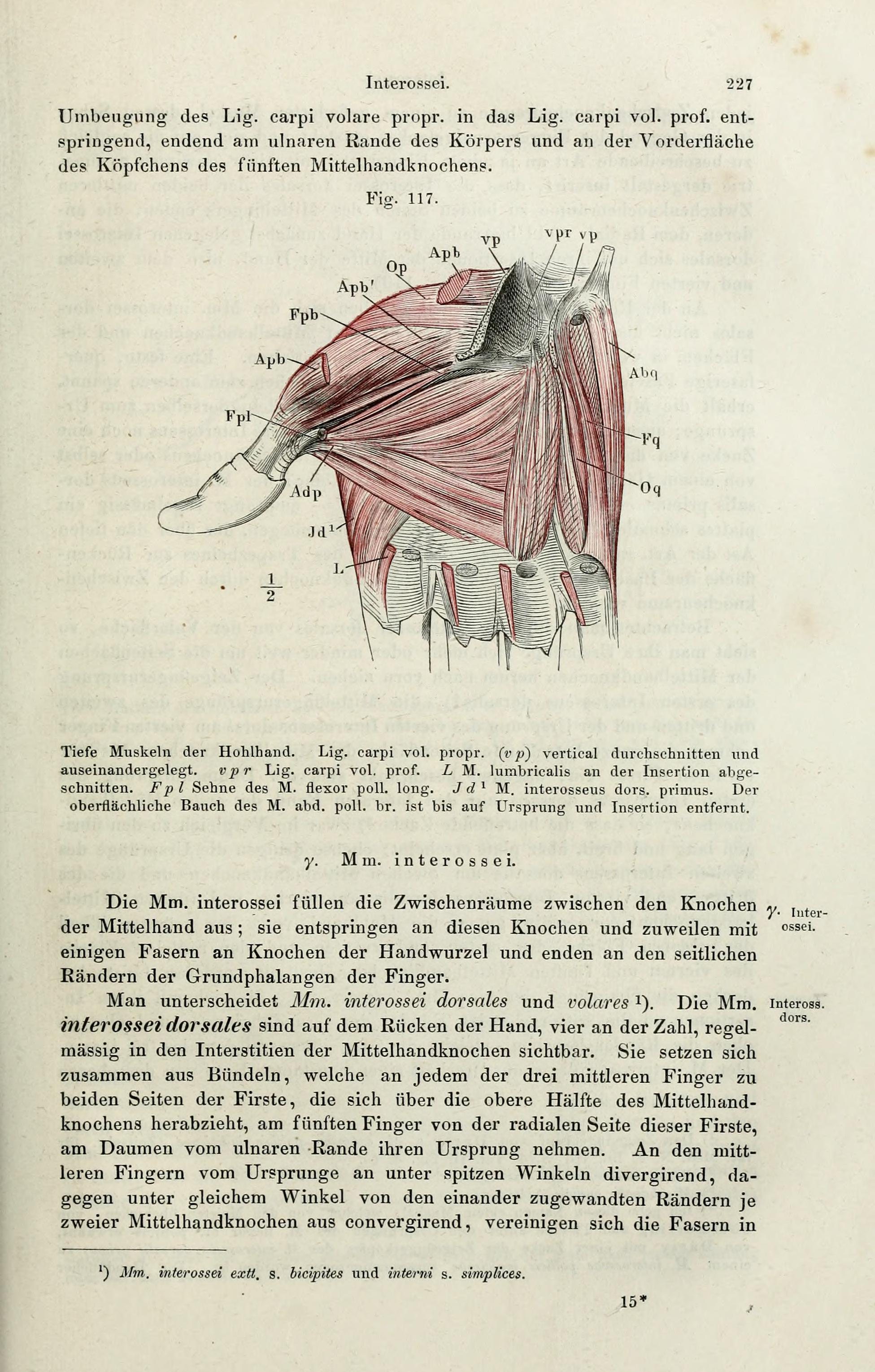 File:Handbuch der systematischen Anatomie des Menschen (Page 227 ...