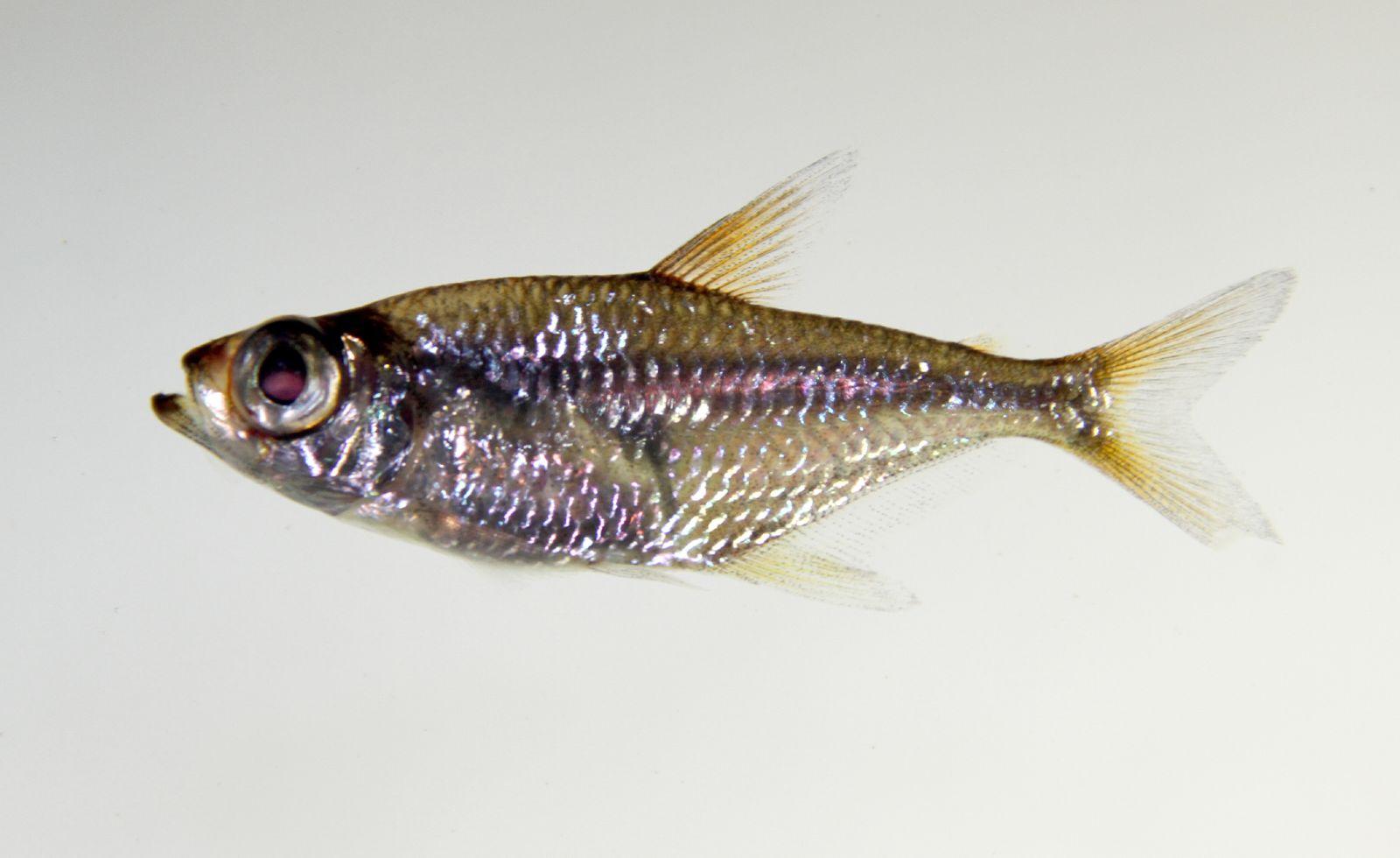 Fish Wikipedia | Download Lengkap