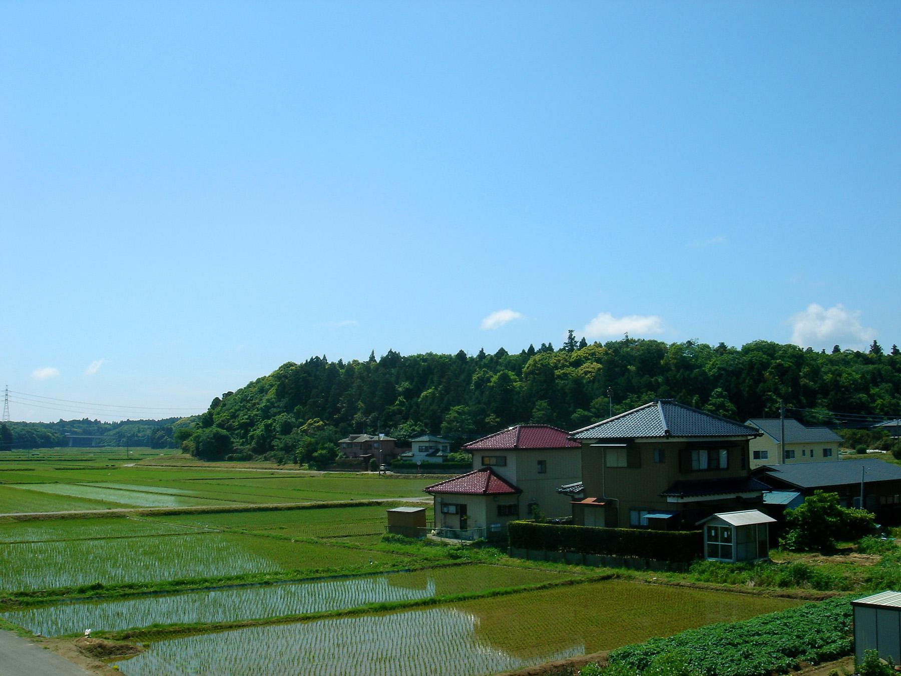Field Crops Rice Rice Fields in Sawara Chiba