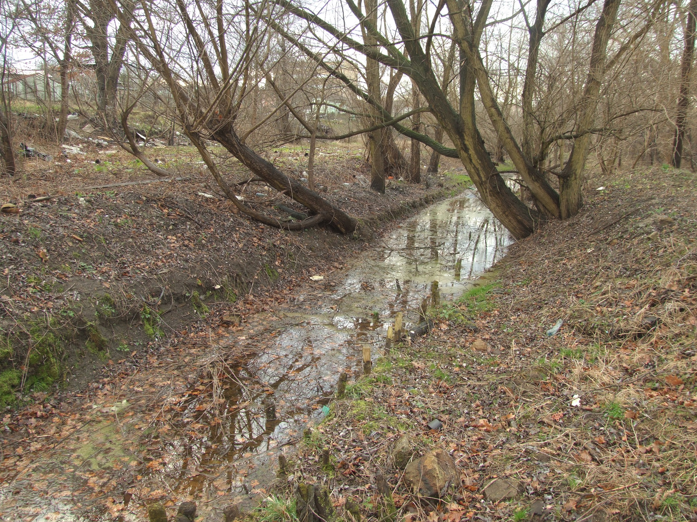 Łącza (dopływ Zimnego Potoku)