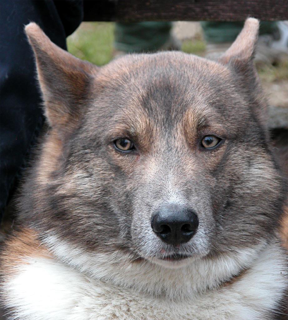 Фото собак и название породы 6