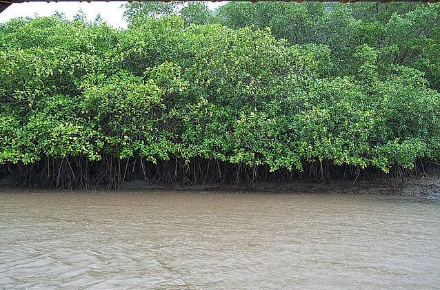 Resultado de imagen para manglar guanacaste