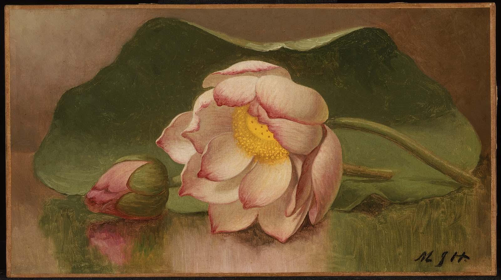 Мартин Джонсон Хид - Цветок лотоса - 47.1165 - Музей изящных искусств Arts.jpg