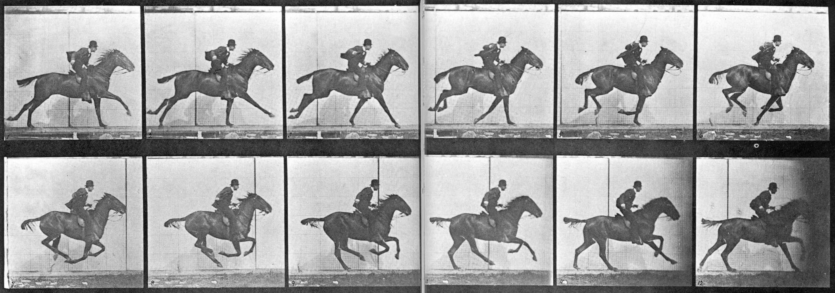 muybridge-horse.jpg