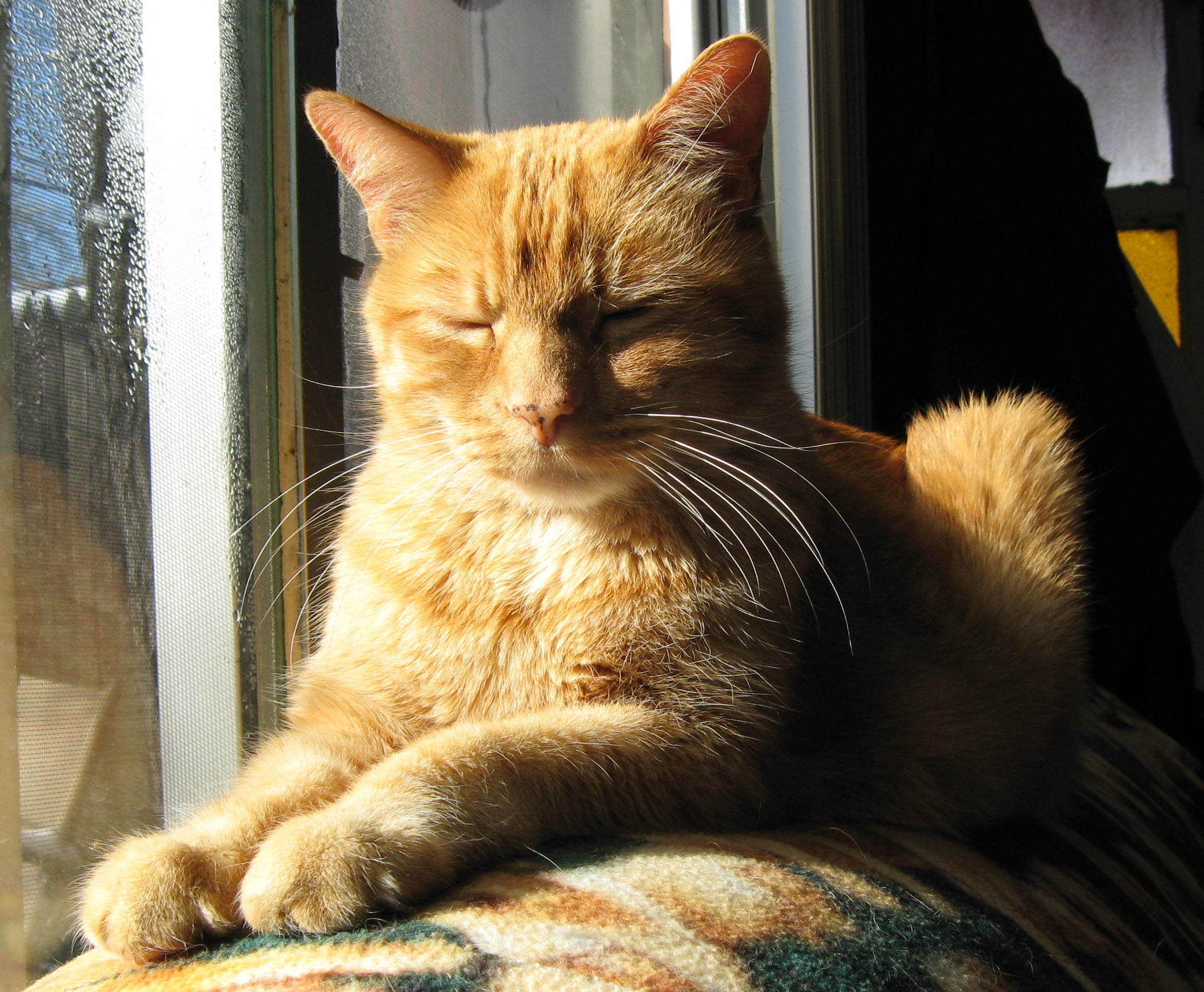 Are Orange Tabby Cats Good Pets