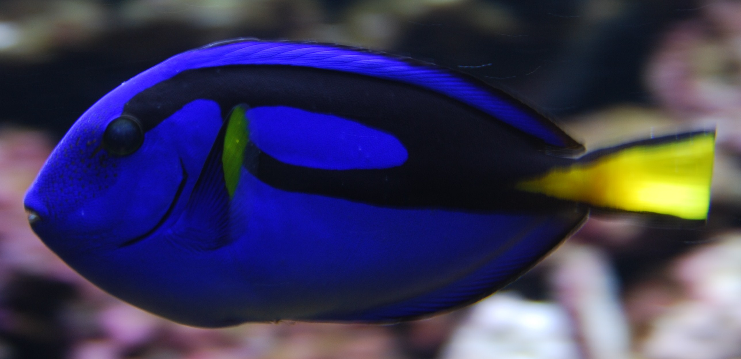 Image Result For Cute Fish Color