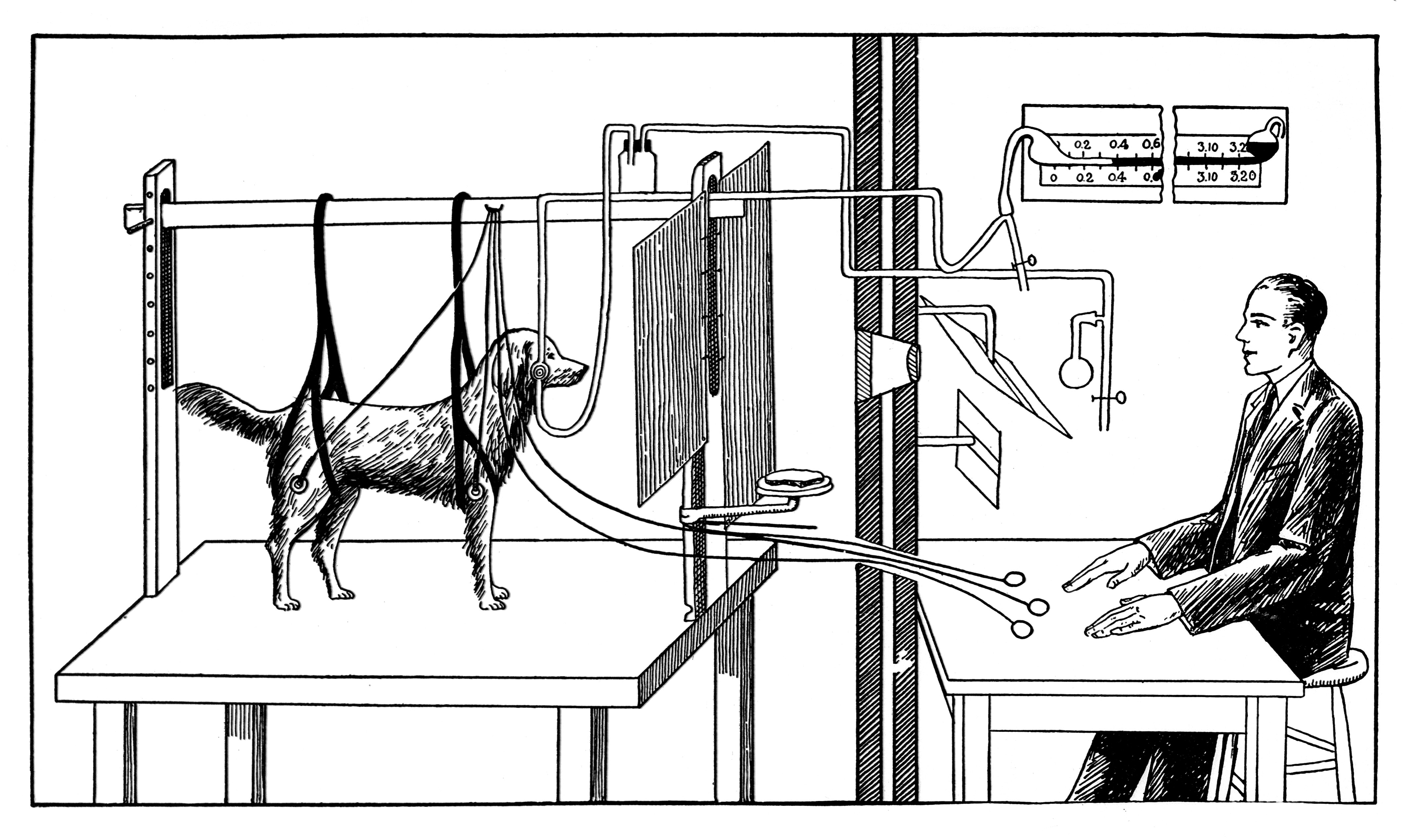 an analysis of the ivan petrovich pavlovs dog experiment The use of structural analysis to develop antcedent-based interventions for ivan pavlov topic ivan petrovich pavlov known for his pavlov's dog experiments.
