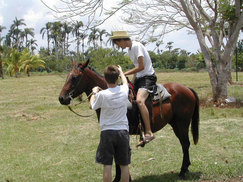 A man riding a horse in a citrus grove