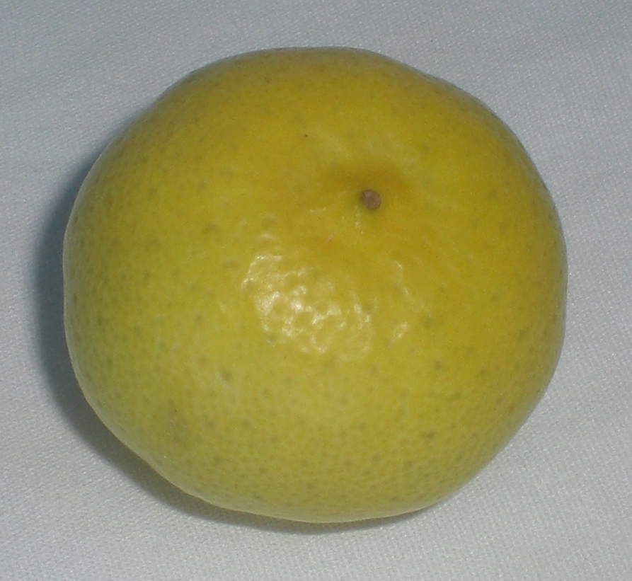 Key lime - Wikipedia