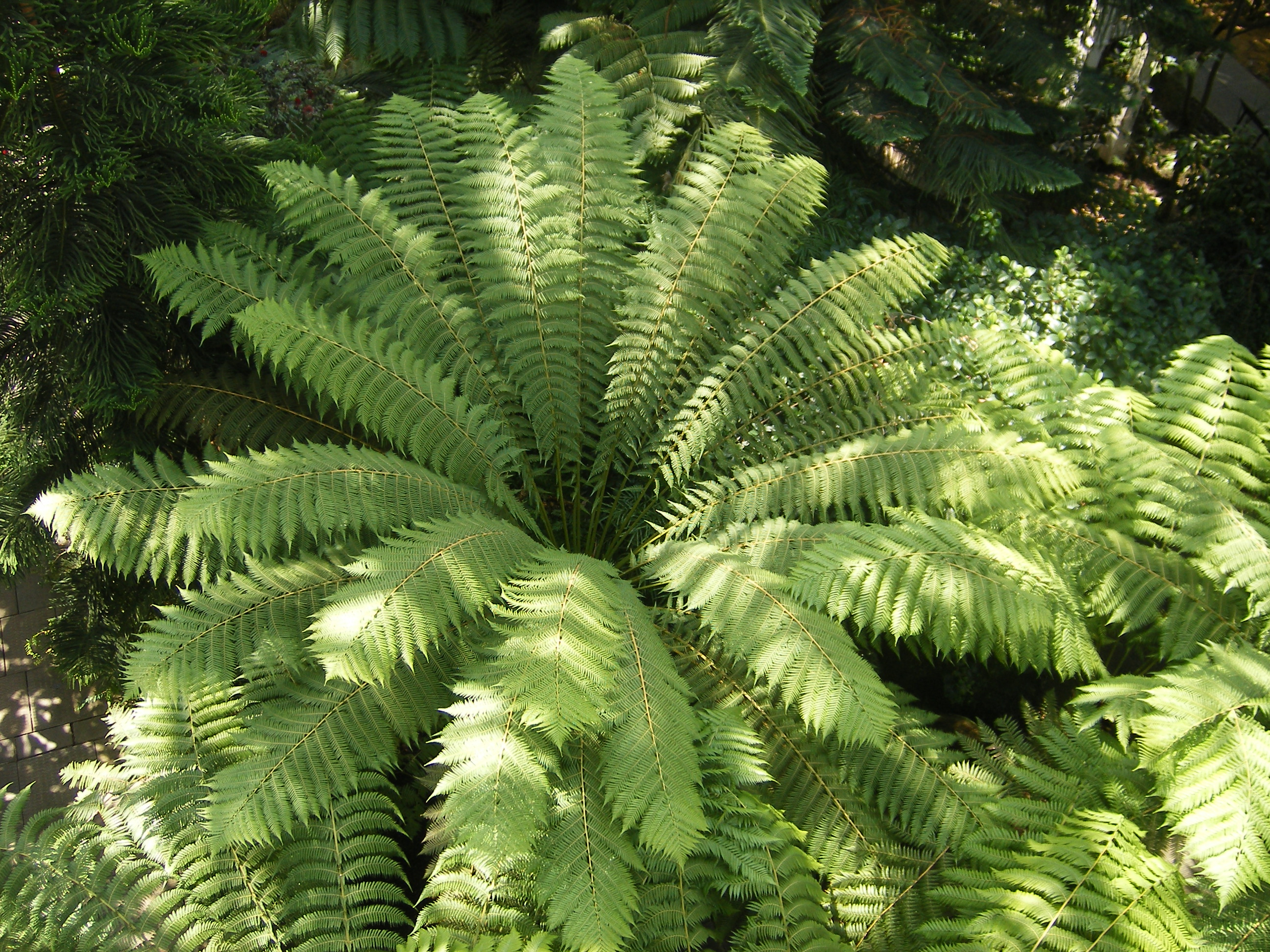 File tree fern at kew garden steve parker jpg for Garden trees types