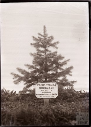 Tree planted by Katherine Douglas Smith