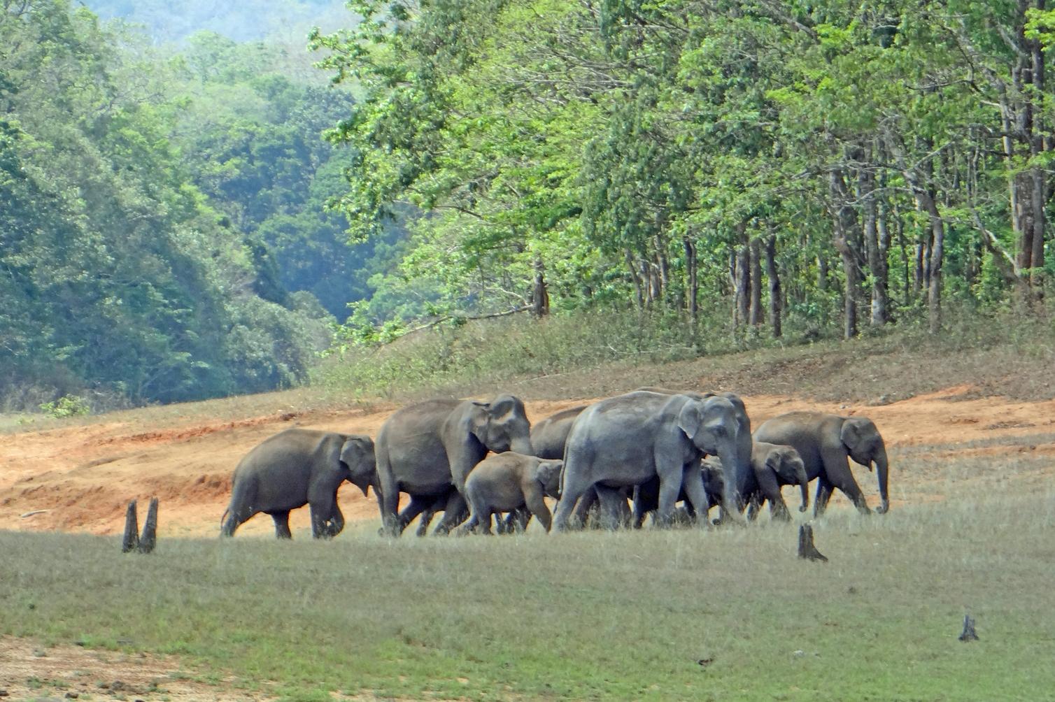 Periyar National Park, Kerala: Things to See and Do