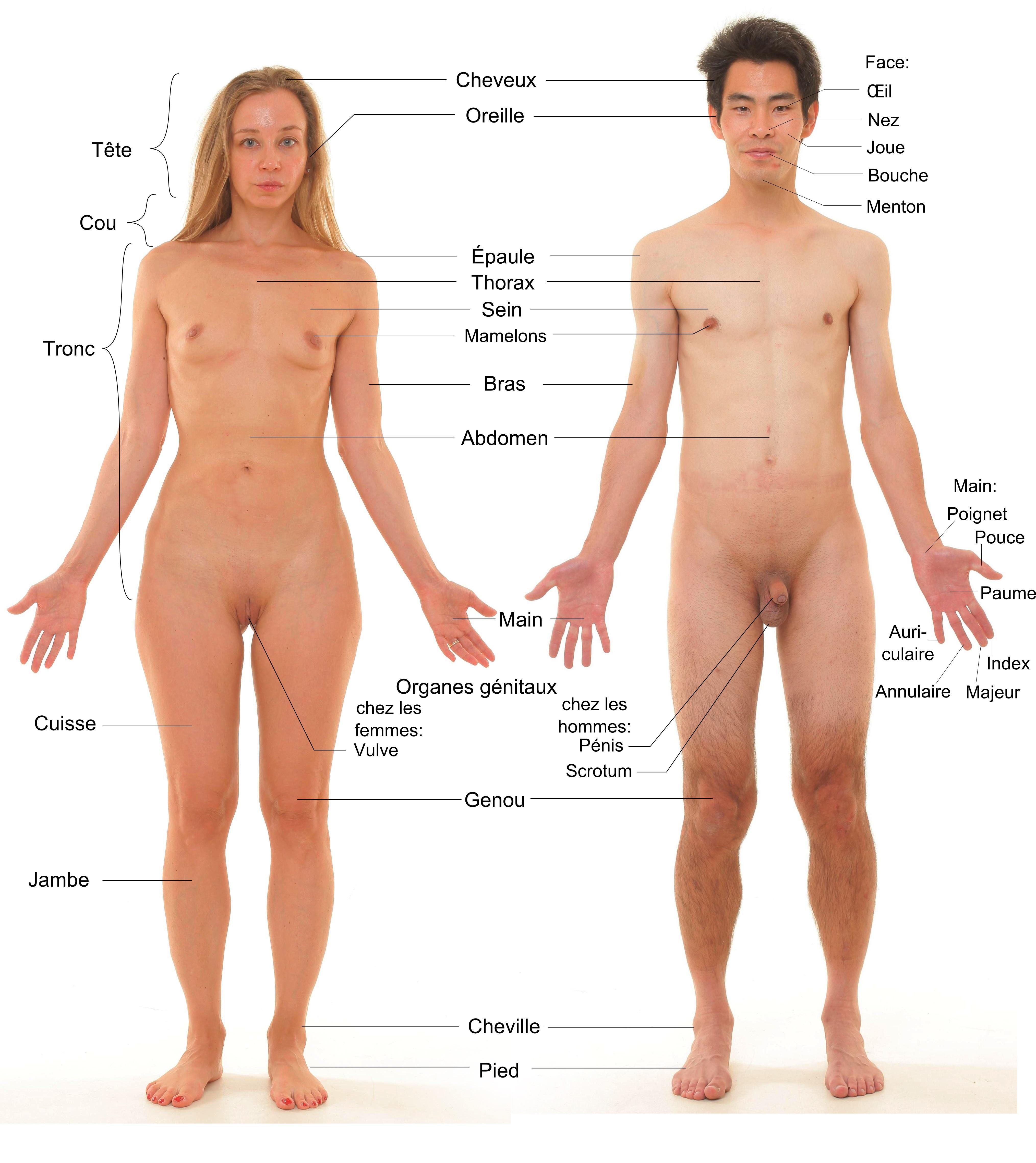 File Vue Anterieure De Humain De Sexe Feminin Et Masculin Jpg Wikimedia Commons
